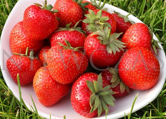 Strawberry fruits of Panon variety in a bowl