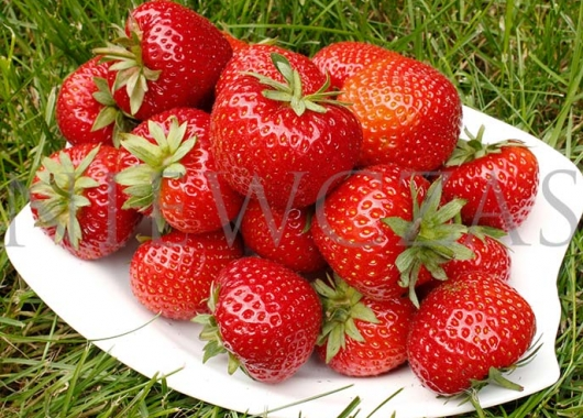 Strawberries Panon variety in a bowl
