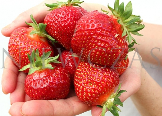 Polka strawberries on hands