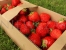 Honeoye strawberry fruits in boxes