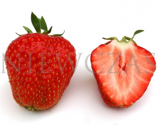 Cut strawberry of Elsanta variety