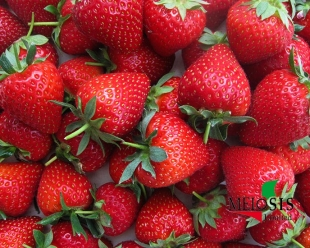 Strawberry fruits of Vibrant variety