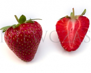 Strawberry fruits of Malling Opal variety